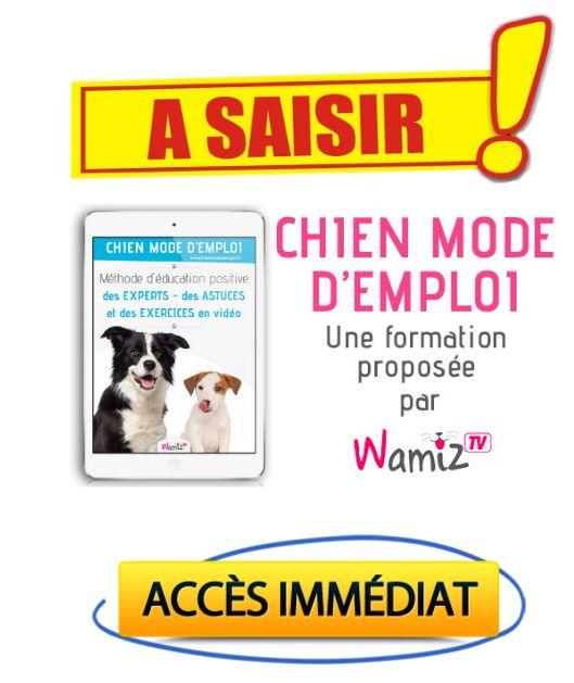 Avis Chien Mode d'Emploi (par Wamiz TV) – Est ce que Chien